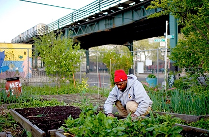 nygardener Les Community Garden de New York