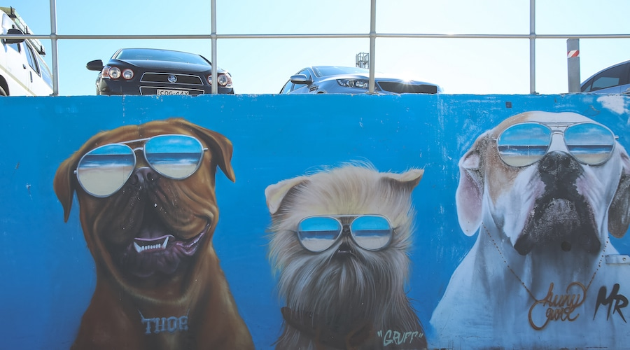 bondi-beach-sydney-graffiti-wall-5