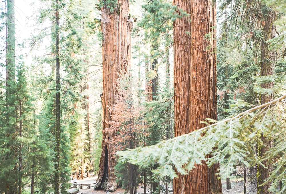 sequoia-national-park-blog-voyage De Los Angeles à Sequoia National Park #4 Road Trip en Californie